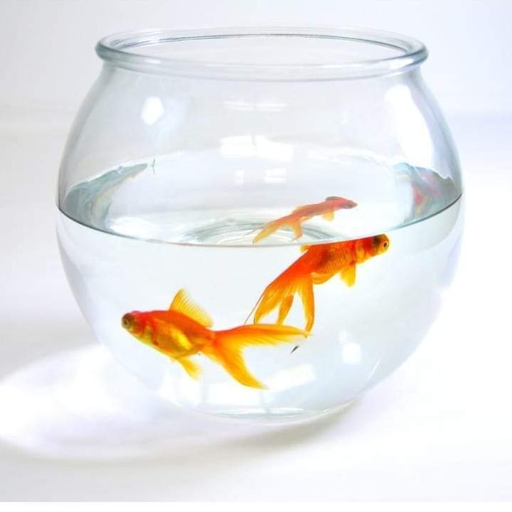 Mini Fish Aquarium